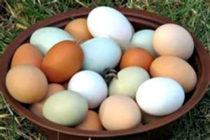 Reston Food Blog - Farm Fresh Eggs